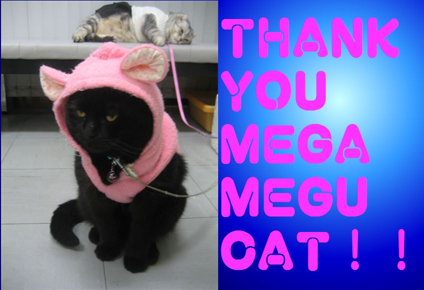 Thank you Mega Megu Cat